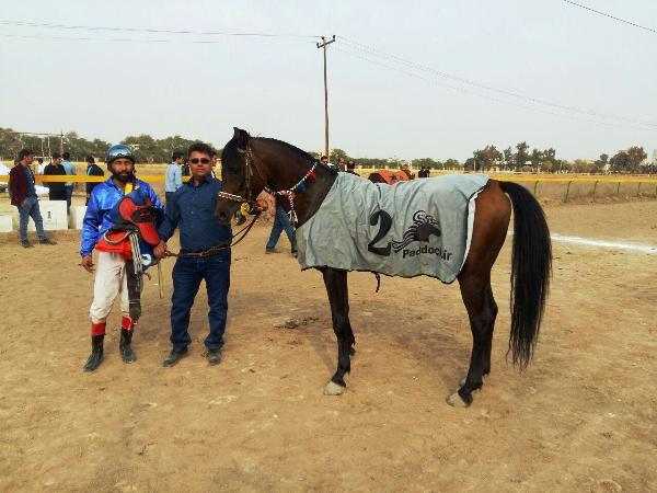 افتخار آفرینی اسبداران و مربیان اصفهانی شرکت کننده در مسابقات شوی زیبایی خوزستان